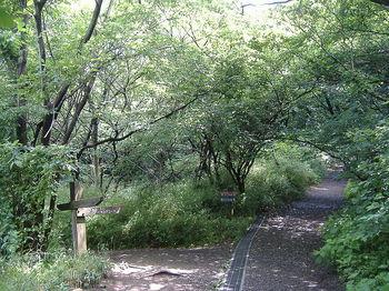 800px-Yokohama_Nature_Sanctuary03.JPG